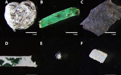 Kunststoffe in Bioabfällen: Belastung für Böden und Gewässer